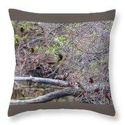 Cedar Waxwings Feeding Throw Pillow