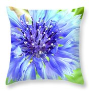 Centaurea Cyanus 1 Throw Pillow