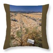 Center Divider - Hwy 395 Throw Pillow