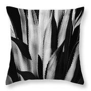 Century Plant Throw Pillow