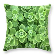 Cerveza And Lime Throw Pillow