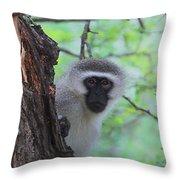 Chacma Baboon Throw Pillow