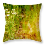 Chamomile In The Sunny Meadow Throw Pillow