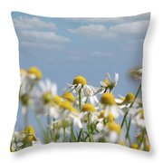 Chamomile Nature Spring Scene Throw Pillow