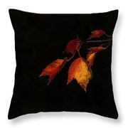 Changing Color Fall Maple Leaves On Black Throw Pillow