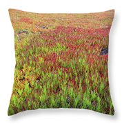 Changing Landscape II Throw Pillow