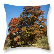 Changing Maple Colors Throw Pillow