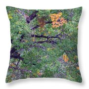 Changing Of The Seasons Throw Pillow by Mary Deal