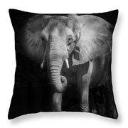 Charging Elephant Throw Pillow by Ken Barrett