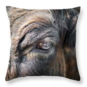 Charming Eye Throw Pillow