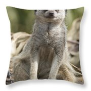 Check Front Throw Pillow