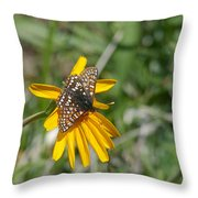 Checkerspot On Bahai Aster 3 Throw Pillow