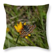 Checkerspot On Bahai Aster 4 Throw Pillow