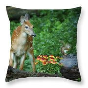 Checking Out The Squirrel Throw Pillow