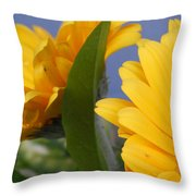 Cheerful Gerbera Daisies Throw Pillow