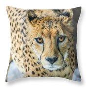 Cheeta Up Close Throw Pillow