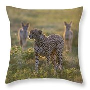 Cheetah Acinonyx Jubatus And Jackals Throw Pillow