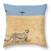 Cheetah Acinonyx Jubatus In Plains Throw Pillow