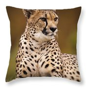 Cheetah Beauty Throw Pillow