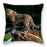 Cheetah Cub Finds Her Pride Rock Throw Pillow