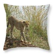 Cheetah Exploration Throw Pillow