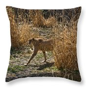 Cheetah  In The Brush Throw Pillow by Douglas Barnett