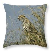Cheetah Lookout Throw Pillow