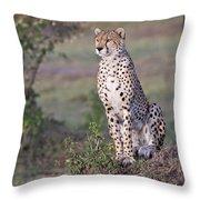 Cheetah Meditating Throw Pillow