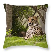 Cheetah Of The Hill Throw Pillow