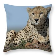 Cheetah On Mound Throw Pillow