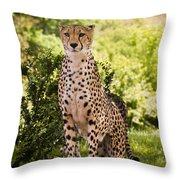 Cheetah Overlook Throw Pillow