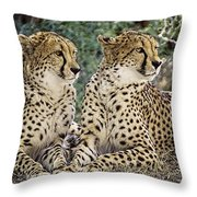 Cheetah Pair Throw Pillow