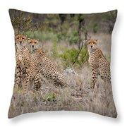 Cheetah Party I Throw Pillow