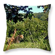 Cheetah Zoo Landscape Throw Pillow