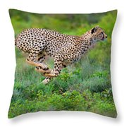 Cheetahs Acinonyx Jubatus Hunting Throw Pillow