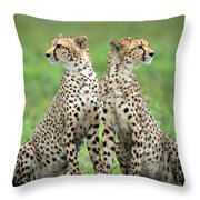 Cheetahs Acinonyx Jubatus In Forest Throw Pillow