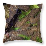 Chelidonura Punctata Nudibranch Throw Pillow