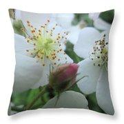 Cherokee Rose Dover Nh  Throw Pillow
