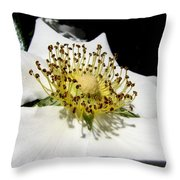 Cherokee Rose Macro Throw Pillow
