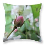 Cherokee Rose Of Dover Throw Pillow