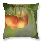 Cherries Hanging On A Branch Throw Pillow