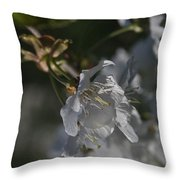 Cherry Blossom 5 Throw Pillow
