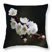 Apricot Blossom I Throw Pillow