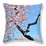 Cherry Blossom Trilogy II Throw Pillow