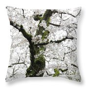 Cherry Blossoms 119 Throw Pillow
