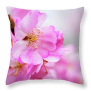 Cherry Blossoms Sweet Pink Throw Pillow
