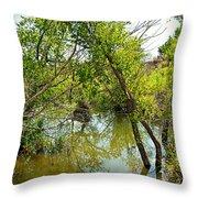 Cherry Creek Trail Study 3 Throw Pillow