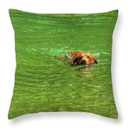 Chesapeake Bay Retriever Swimming Throw Pillow