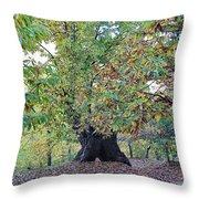 Chestnut Tree In Autumn Throw Pillow