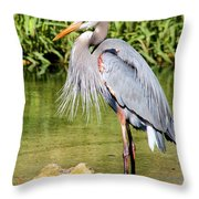 Chest Feathers Throw Pillow